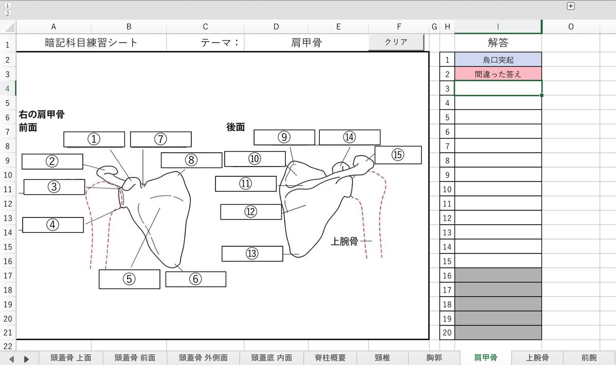 暗記シート 解剖学 xlsm