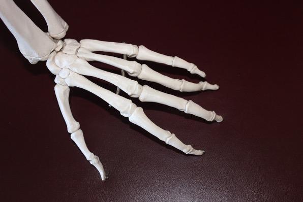 Skeleton 778069 1280
