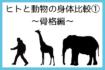 [αź]【15】ヒトと動物の身体比較①(骨格編) #七ブ侍 #月曜日
